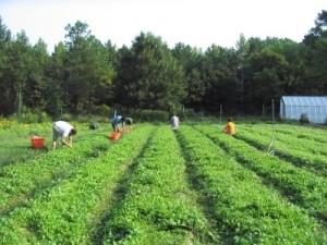 certificare-agricultura-ecologica