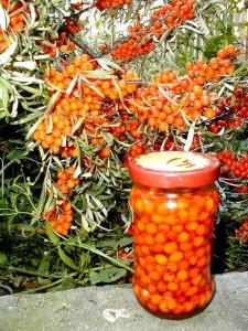 plante-medicinale-1